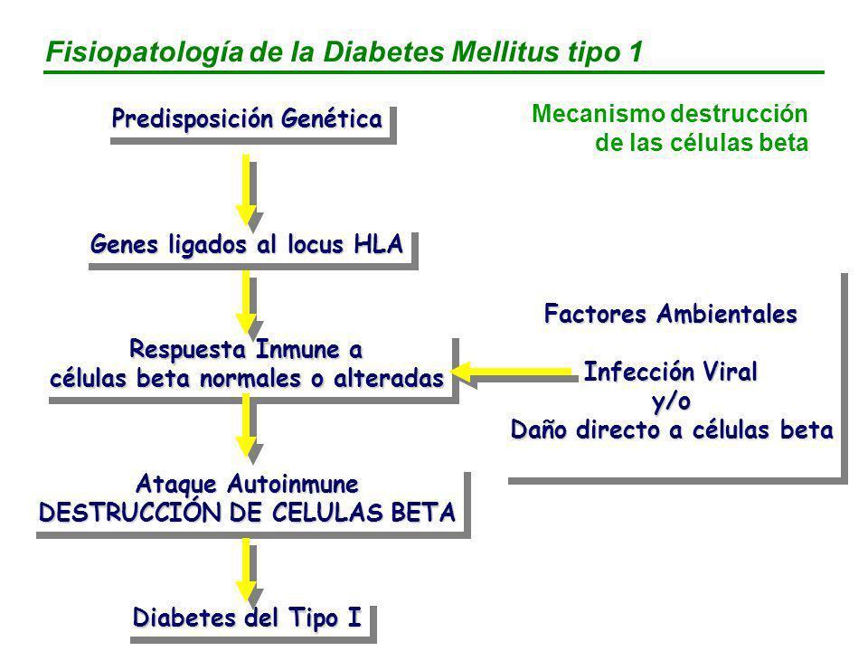 Hiperglucemia Absorción de HC Descenso captación muscular de la glucosa Aumento producción hepática de glucosa Secreción inapropiada de insulina Sulfonilureas Meglitinidas Insulina Metformina Glitazonas Glitazonas Metformina Inh.