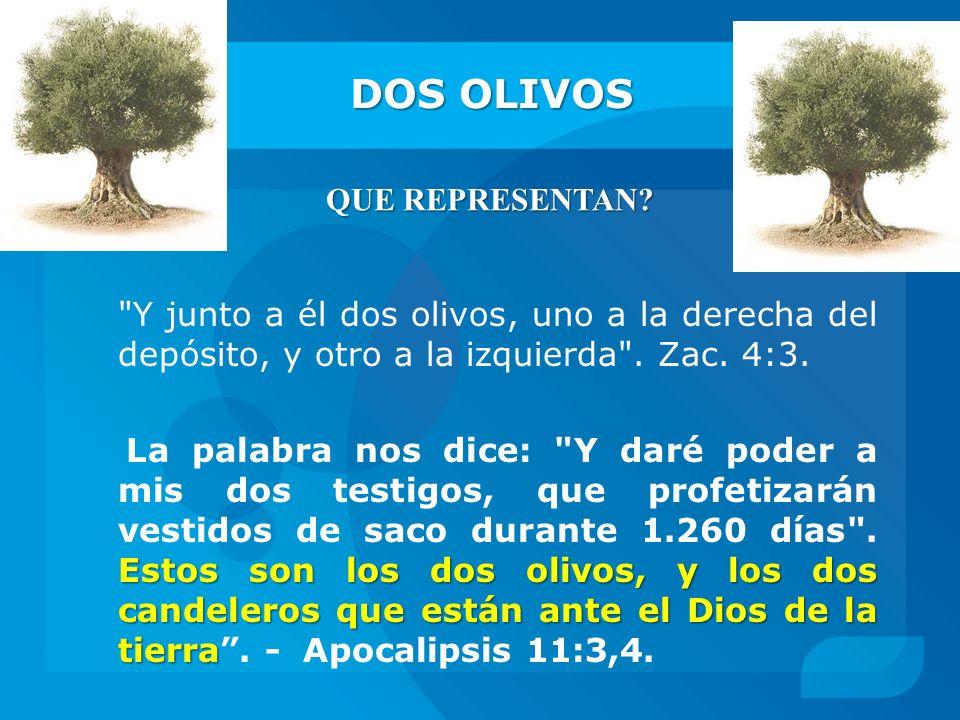 DOS OLIVOS