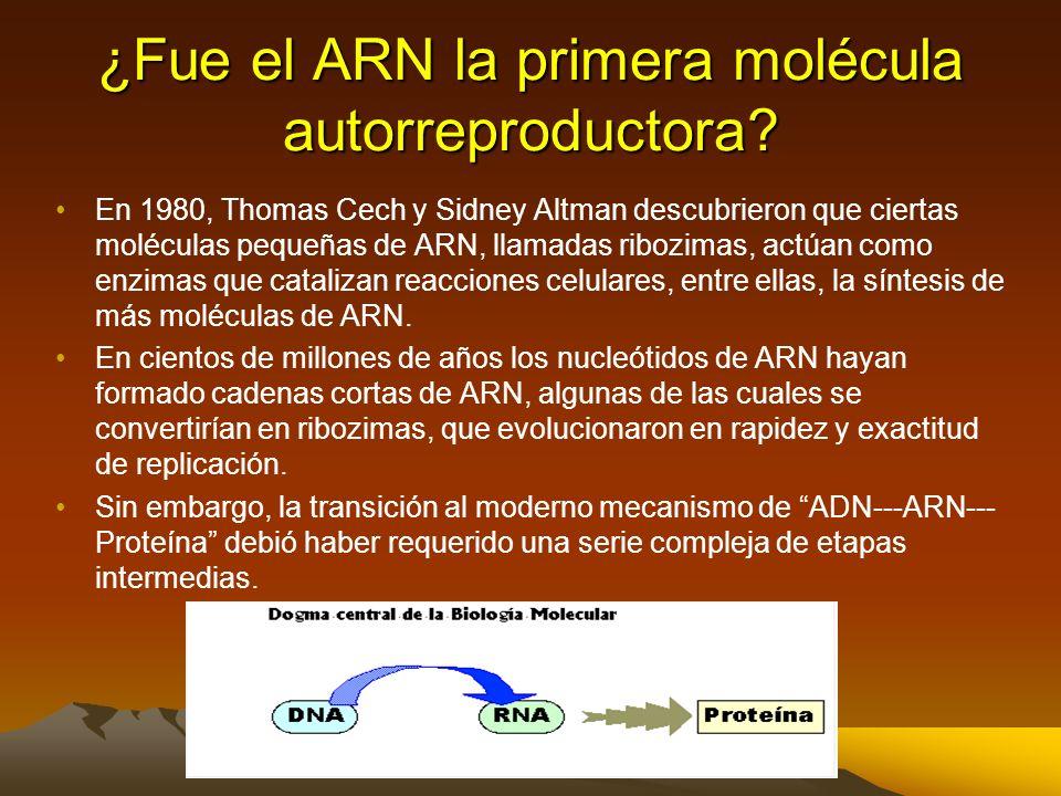 Se sintetizan moléculas orgánicas espontáneamente en condiciones prebióticas En 1953, Stanley Miller y Harold Urey, (Universidad de Chicago), se propu