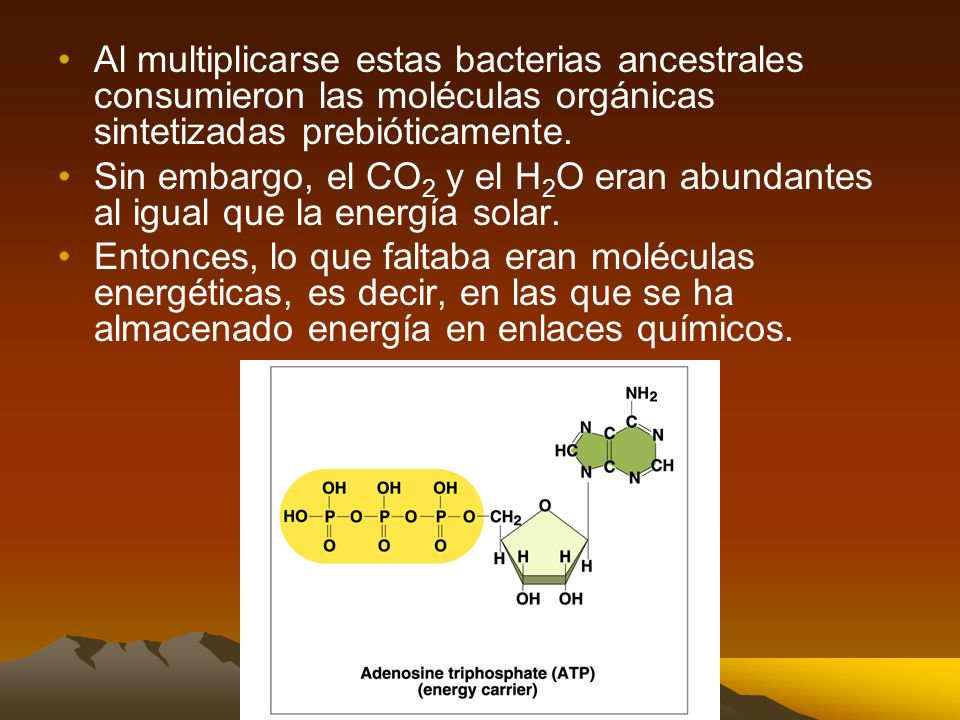 Los primeros organismos eran procariotas anaerobios Las primeras células eran procariotas: –Su material genético NO estaba separado del resto de la cé
