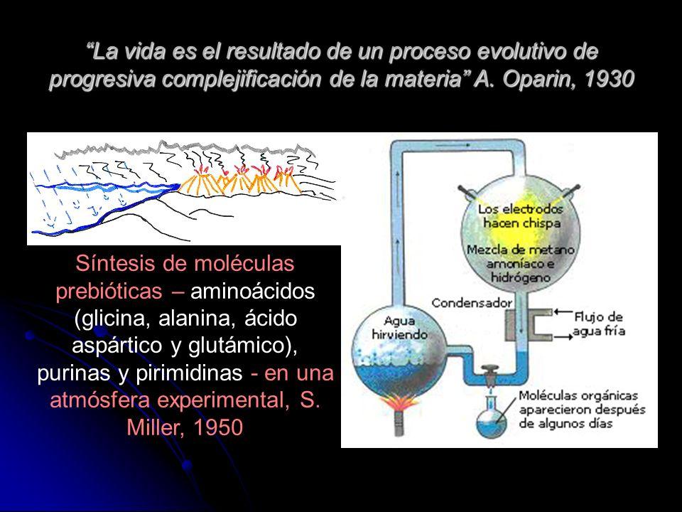 La vida es el resultado de un proceso evolutivo de progresiva complejificación de la materia A. Oparin, 1930 Síntesis de moléculas prebióticas – amino