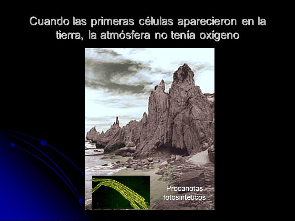 Cuando las primeras células aparecieron en la tierra, la atmósfera no tenía oxígeno Procariotas fotosintéticos