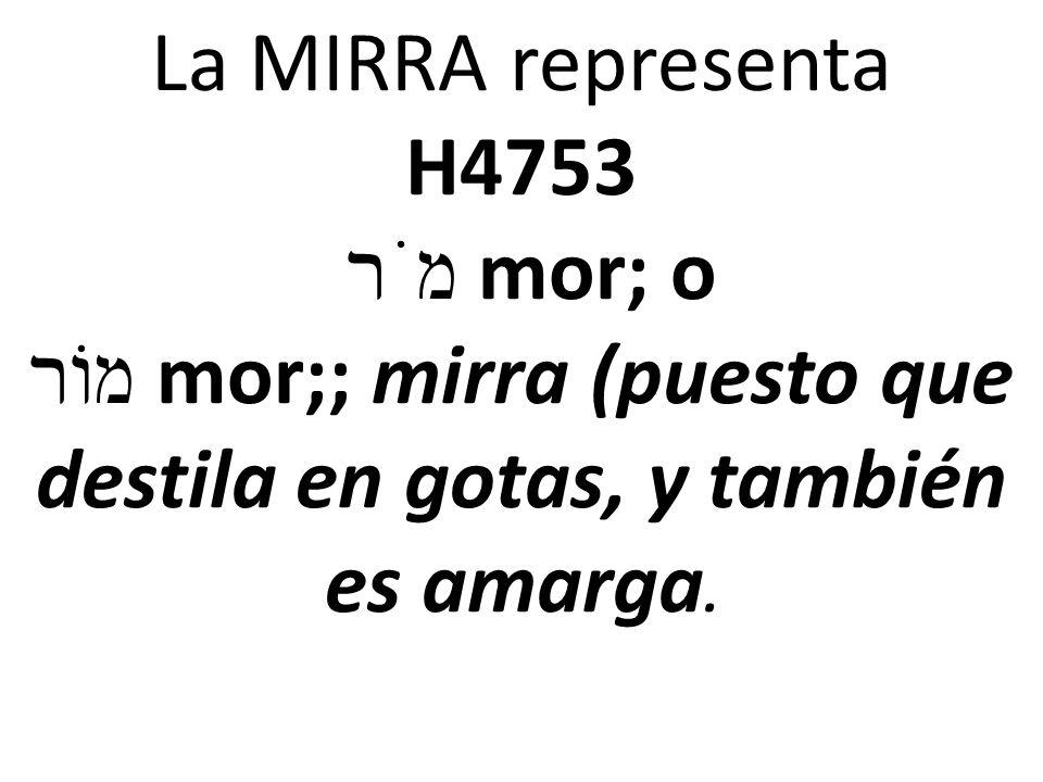 La MIRRA representa H4753 מֹר mor; o מוֹר mor;; mirra (puesto que destila en gotas, y también es amarga.