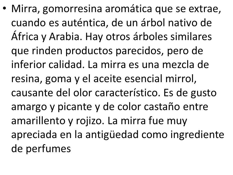 Mirra, gomorresina aromática que se extrae, cuando es auténtica, de un árbol nativo de África y Arabia. Hay otros árboles similares que rinden product