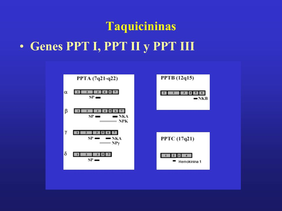 Taquicininas Genes PPT I, PPT II y PPT III Hemokinina 1