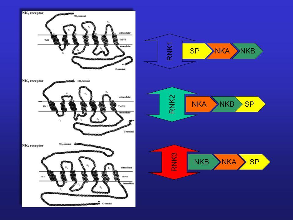 SPNKANKB RNK1RNK2 NKASPNKB NKA RNK3 SP