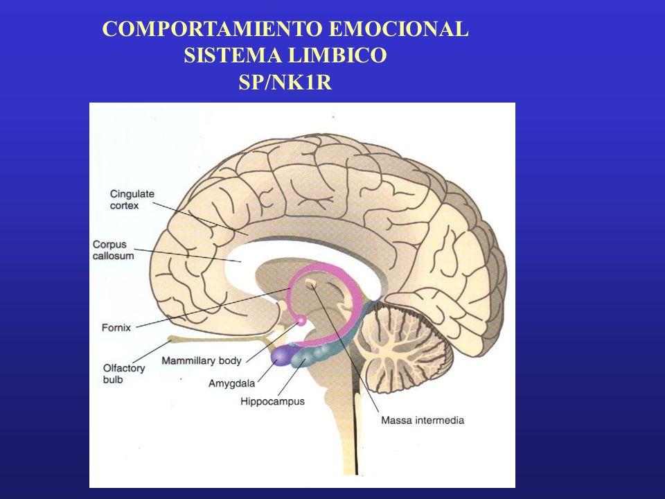 COMPORTAMIENTO EMOCIONAL SISTEMA LIMBICO SP/NK1R