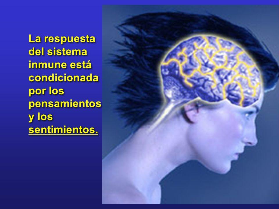 La respuesta del sistema inmune está condicionada por los pensamientos y los sentimientos.