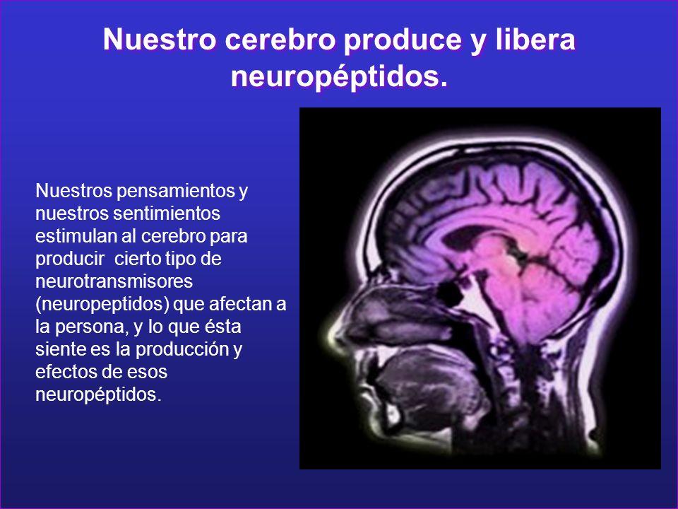 Nuestro cerebro produce y libera neuropéptidos. Nuestro cerebro produce y libera neuropéptidos. Nuestros pensamientos y nuestros sentimientos estimula