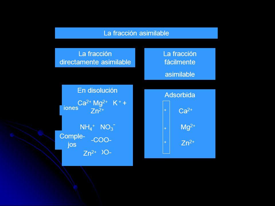 La fracción directamente asimilable En disolución Ca 2+ Mg 2+ K + + Zn 2+ NH 4 + NO 3 - -COO- La fracción fácilmente asimilable La fracción asimilable