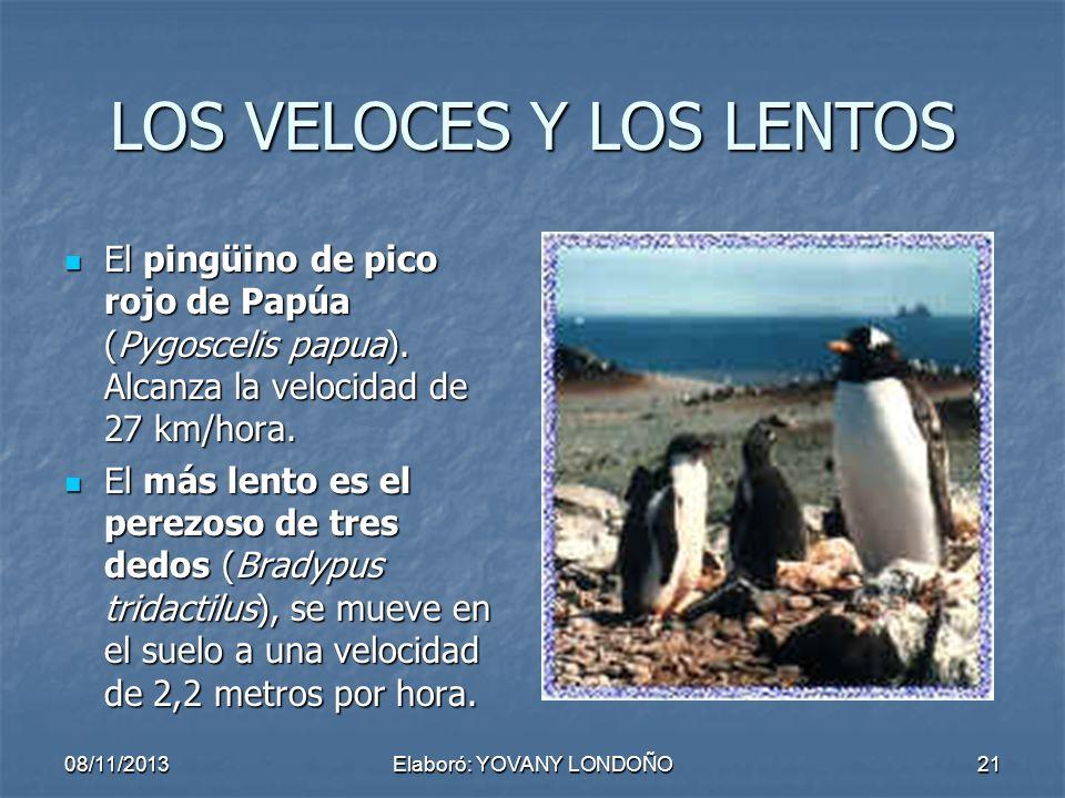 21 LOS VELOCES Y LOS LENTOS El pingüino de pico rojo de Papúa (Pygoscelis papua). Alcanza la velocidad de 27 km/hora. El más lento es el perezoso de t