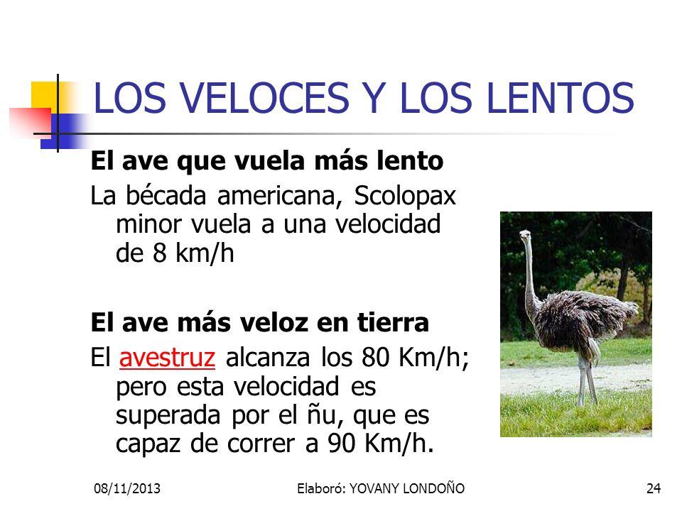 24 LOS VELOCES Y LOS LENTOS El ave que vuela más lento La bécada americana, Scolopax minor vuela a una velocidad de 8 km/h El ave más veloz en tierra