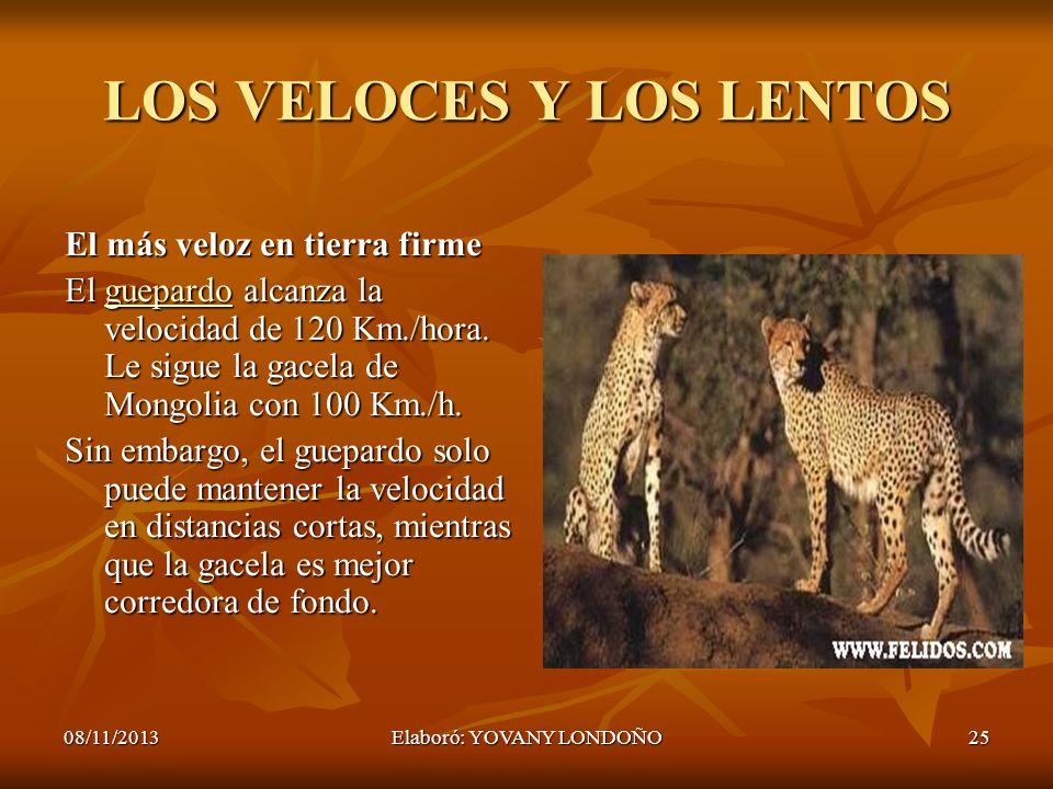 25 LOS VELOCES Y LOS LENTOS El más veloz en tierra firme El guepardo alcanza la velocidad de 120 Km./hora. Le sigue la gacela de Mongolia con 100 Km./