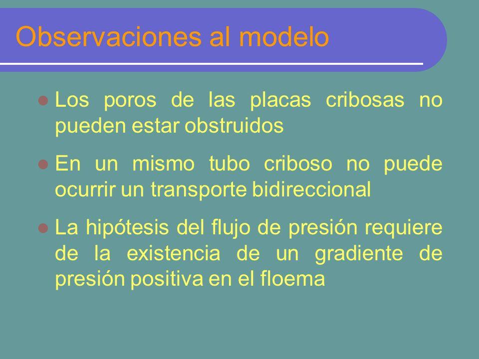 Observaciones al modelo Los poros de las placas cribosas no pueden estar obstruidos En un mismo tubo criboso no puede ocurrir un transporte bidireccio