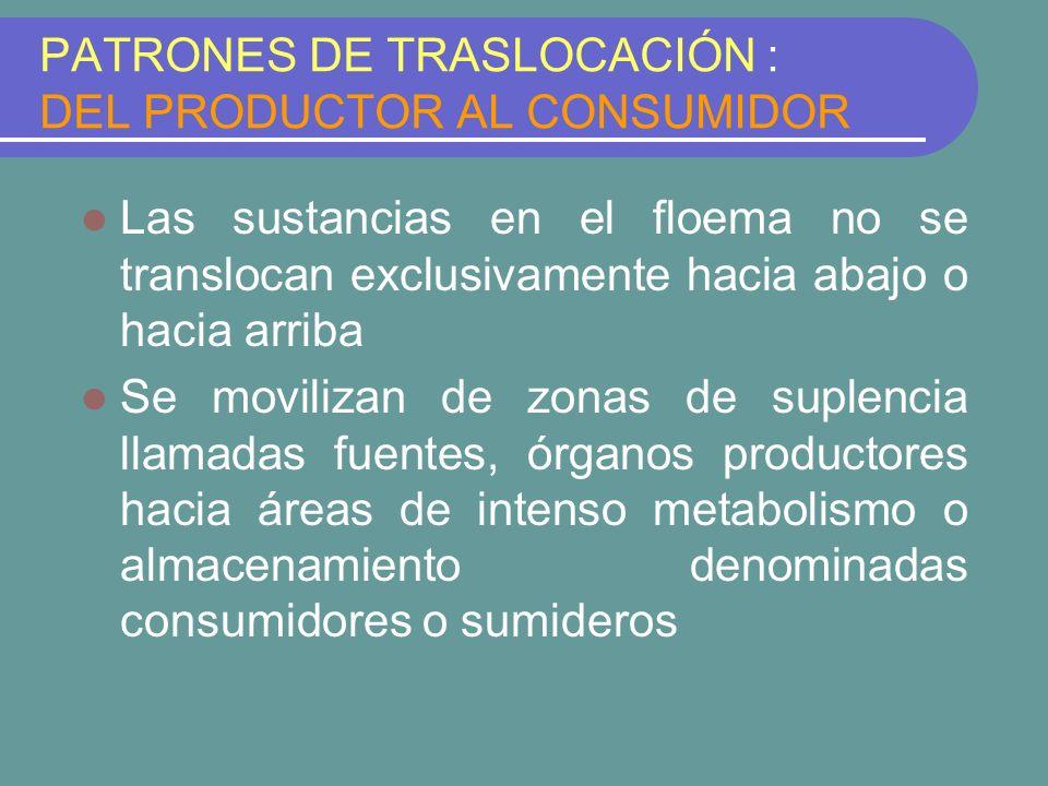 PATRONES DE TRASLOCACIÓN : DEL PRODUCTOR AL CONSUMIDOR Las sustancias en el floema no se translocan exclusivamente hacia abajo o hacia arriba Se movil