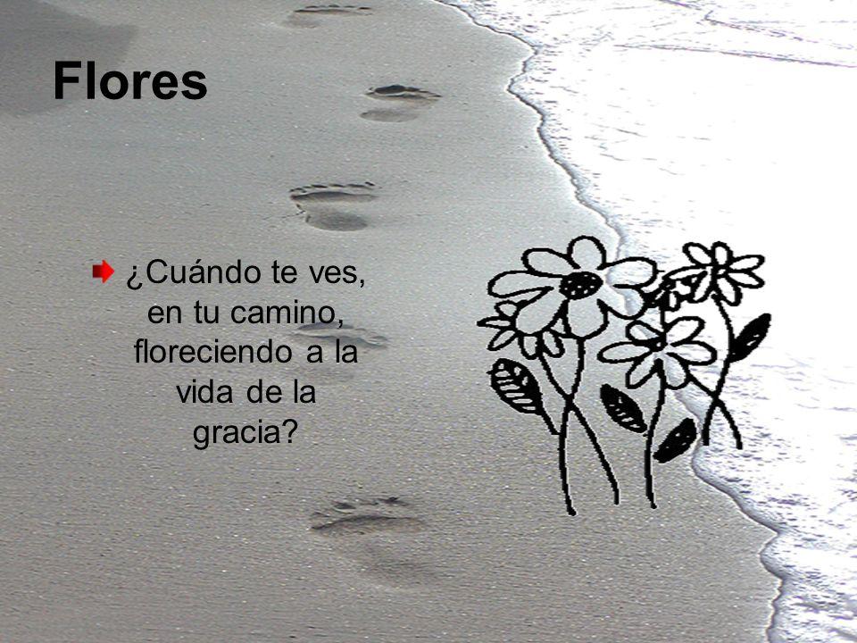 Flores ¿Cuándo te ves, en tu camino, floreciendo a la vida de la gracia?