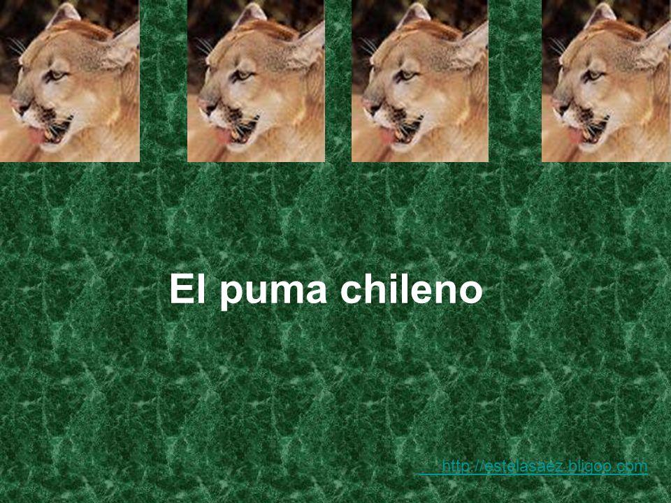 Considerado el felino más grande de Chile y con una discutible reputación de predador del ganado doméstico, es posible encontrar representantes de esta especie desde la Columbia Británica, en Canadá, por el norte, hasta el Estrecho de Magallanes, por el sur.