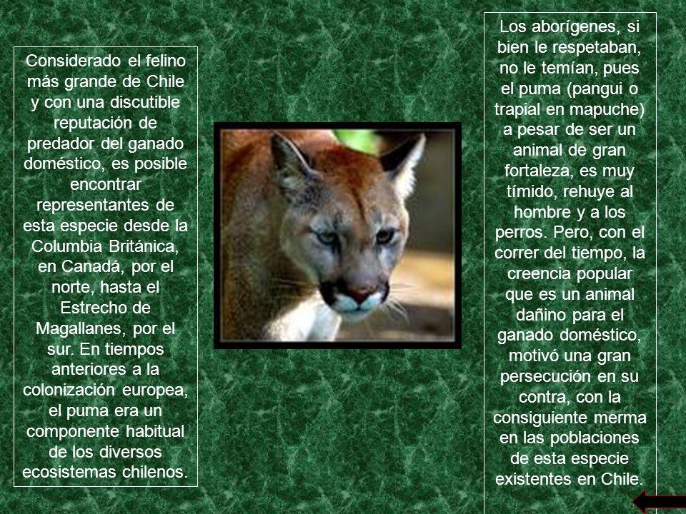 En nuestro país, hay una cantidad de alrededor de 250 especies en vías de extinción, entre ellas flora y fauna.