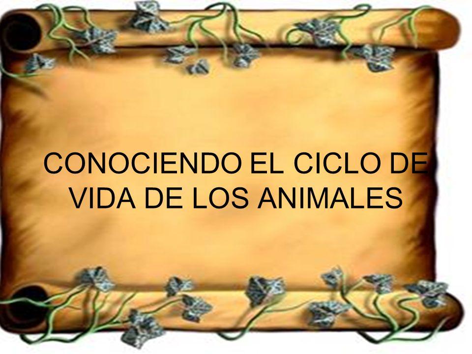 CONOCIENDO EL CICLO DE VIDA DE LOS ANIMALES