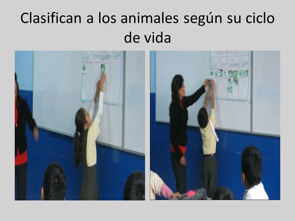 Clasifican a los animales según su ciclo de vida