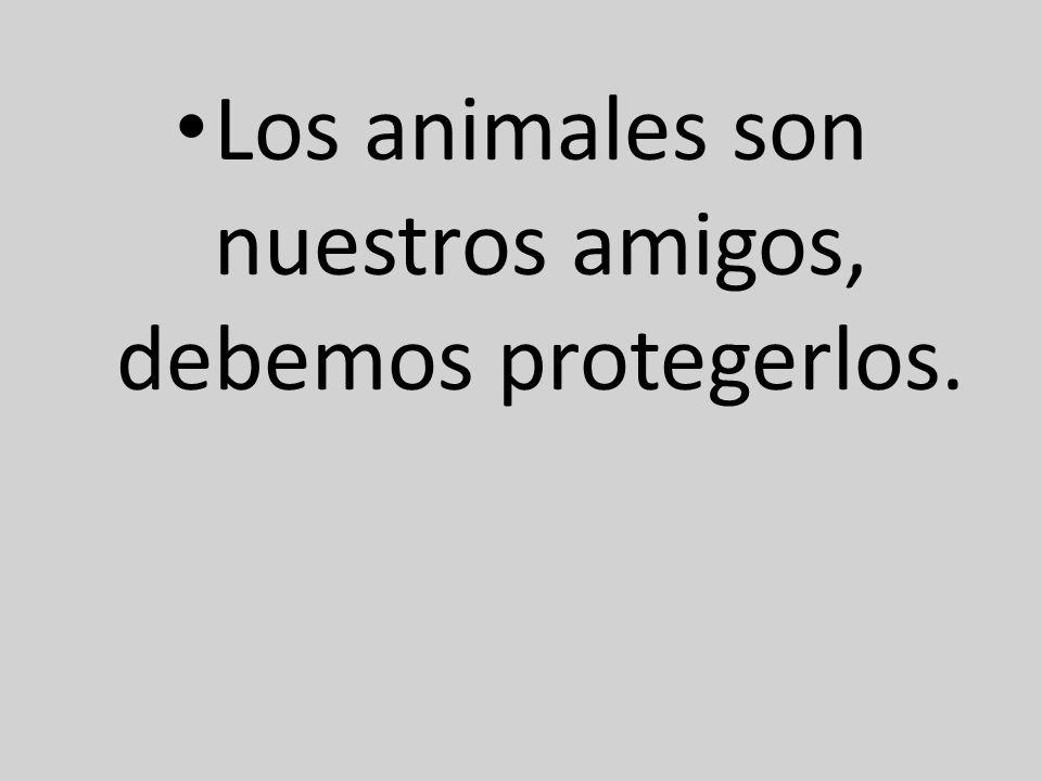 Los animales son nuestros amigos, debemos protegerlos.