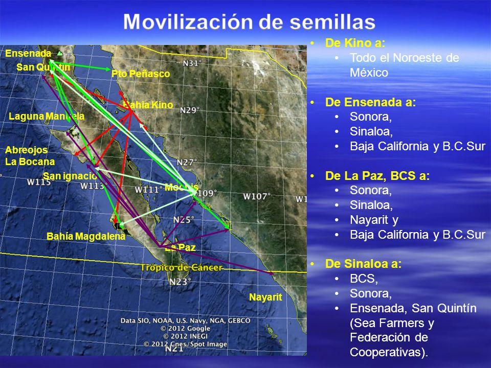 San Quintin Bahia Kino La Paz Laguna Manuela San ignacio Abreojos La Bocana Bahía Magdalena Mochis Nayarit De Kino a: Todo el Noroeste de México De En