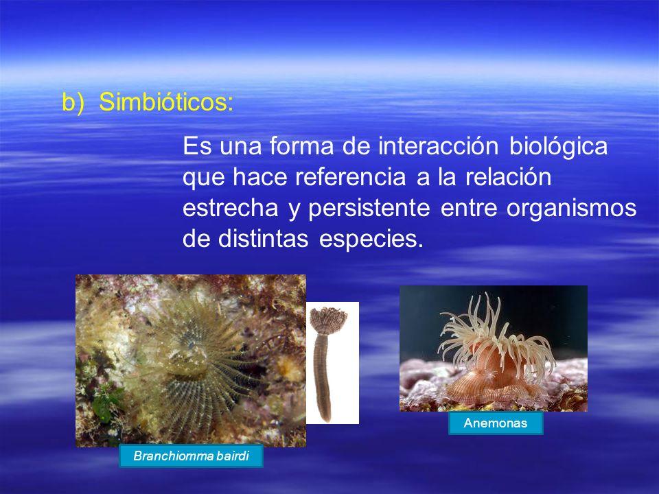 b) b)Simbióticos: Es una forma de interacción biológica que hace referencia a la relación estrecha y persistente entre organismos de distintas especie
