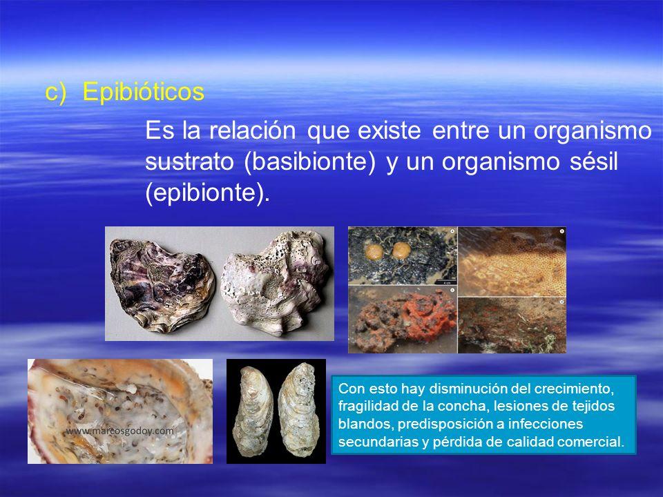c) c)Epibióticos Es la relación que existe entre un organismo sustrato (basibionte) y un organismo sésil (epibionte). Con esto hay disminución del cre