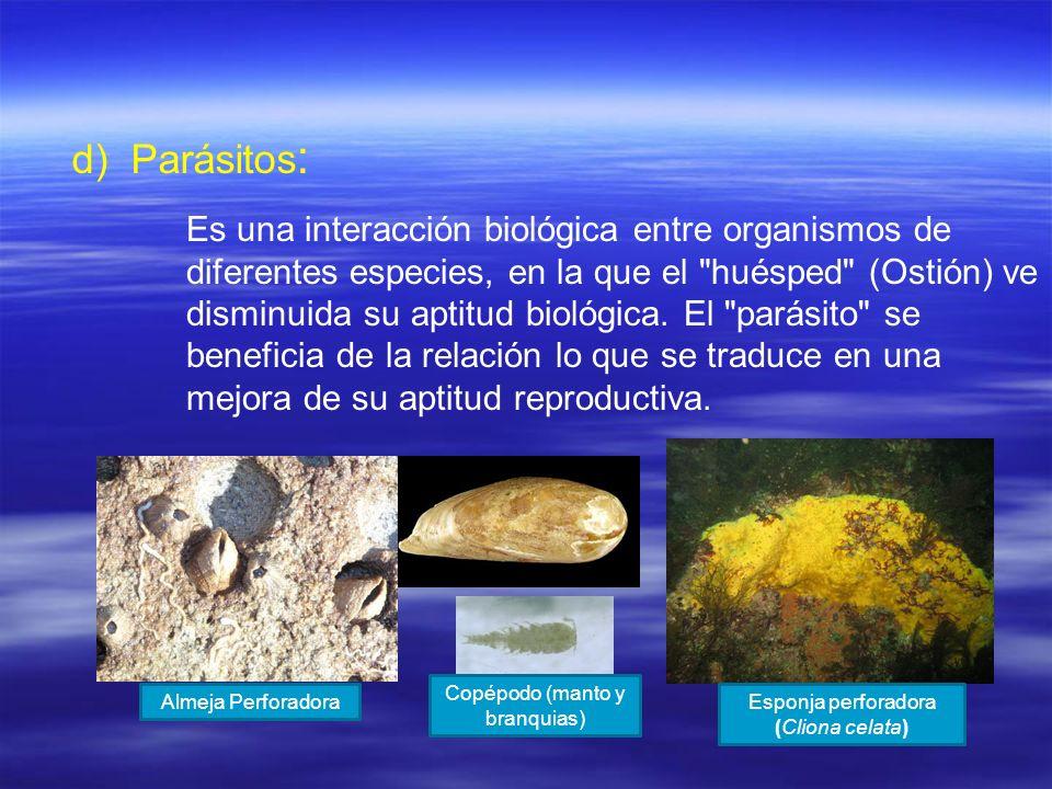 d) d)Parásitos : Es una interacción biológica entre organismos de diferentes especies, en la que el