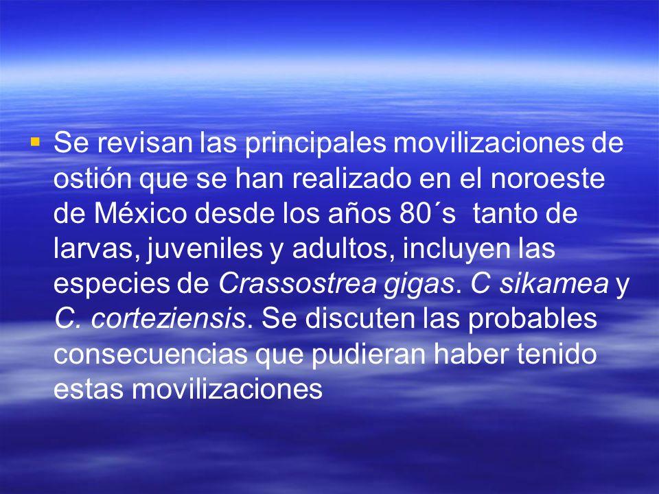 Se revisan las principales movilizaciones de ostión que se han realizado en el noroeste de México desde los años 80´s tanto de larvas, juveniles y adu