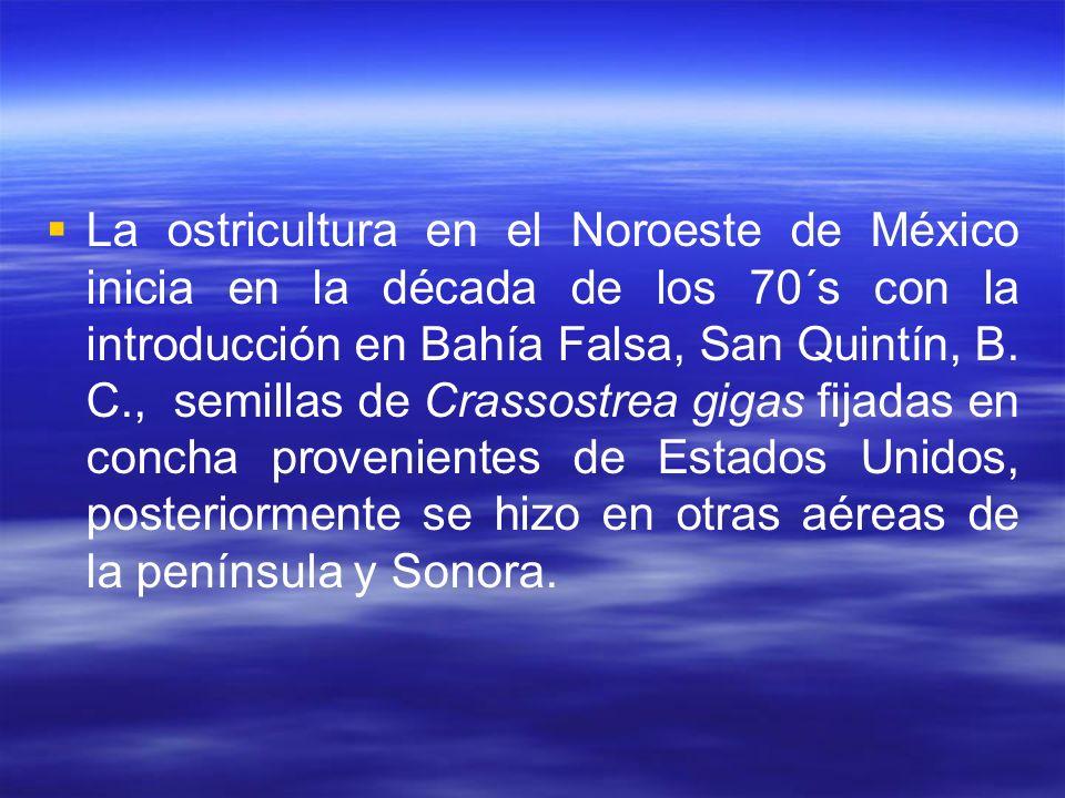 La ostricultura en el Noroeste de México inicia en la década de los 70´s con la introducción en Bahía Falsa, San Quintín, B. C., semillas de Crassostr