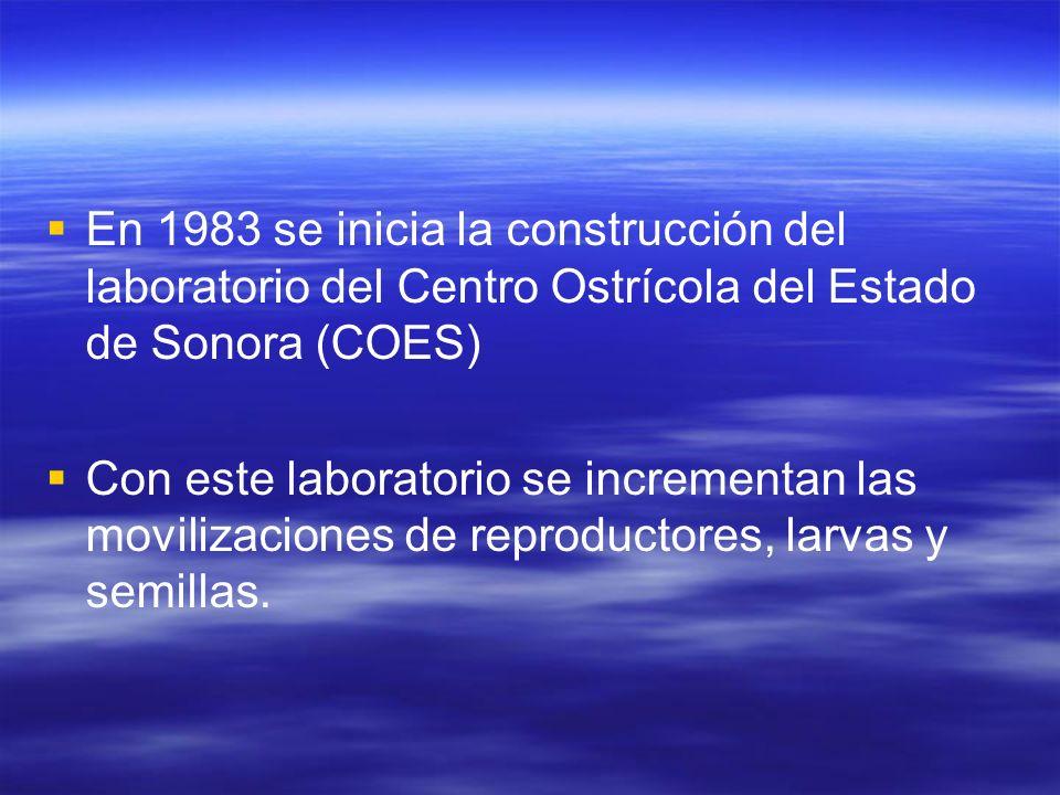 En 1983 se inicia la construcción del laboratorio del Centro Ostrícola del Estado de Sonora (COES) Con este laboratorio se incrementan las movilizacio