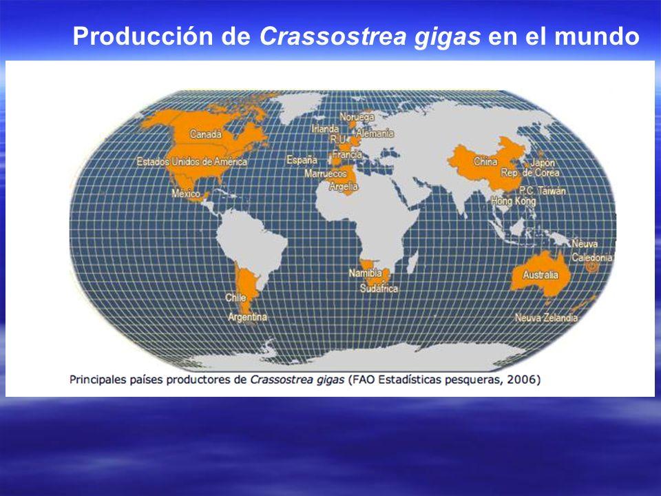 Producción de Crassostrea gigas en el mundo