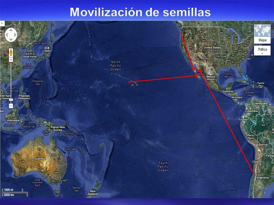 ESTADOS UNIDOS MEXICANOS SECRETARÍA DE AGRICULTURA, GANADERÍA, DESARROLLO RURAL, PESCA Y ALIMENTACIÓN SERVICIO NACIONAL DE SANIDAD, INOCUIDAD Y CALIDAD AGROALIMENTARIA DIRECCIÓN GENERAL DE SALUD ANIMAL- DIRECCIÓN DE SANIDAD ACUÍCOLA Y PESQUERA Av.