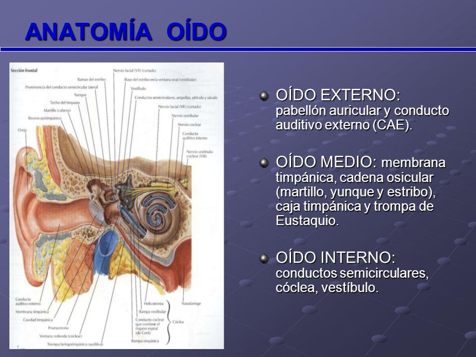 OÍDO MEDIO Pared lateral cavidad timpánica Sección coronal oblicua CAE y oído medio Cadena de huesecillos