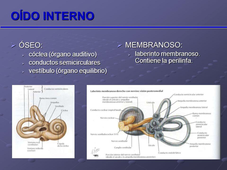 Anatomía TCMD v.ventana oval e. epitímpano Plano coronal v e y Plano axial c m y.