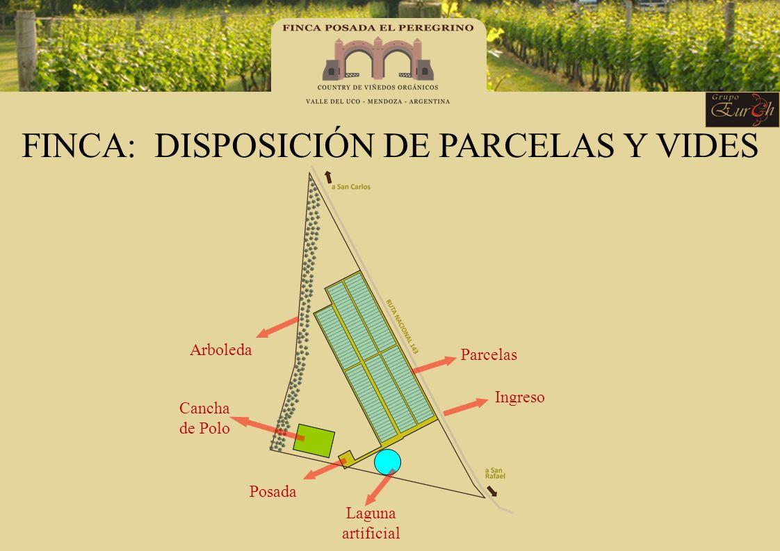 FINCA: DISPOSICIÓN DE PARCELAS Y VIDES Parcelas Ingreso Posada Arboleda Cancha de Polo Laguna artificial