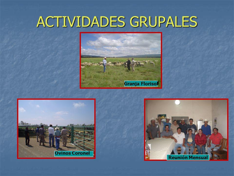 ACTIVIDADES GRUPALES Reunión Mensual Granja Florisol Reunión Mensual Ovinos Coronel