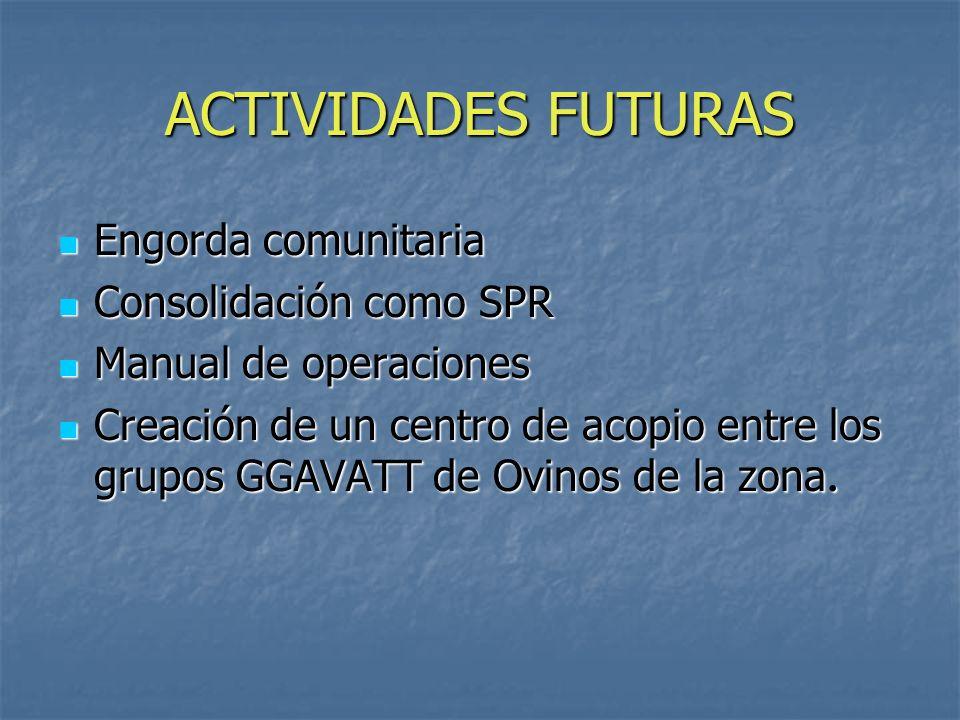 ACTIVIDADES FUTURAS Engorda comunitaria Engorda comunitaria Consolidación como SPR Consolidación como SPR Manual de operaciones Manual de operaciones