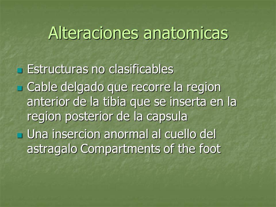 Alteraciones anatomicas Estructuras no clasificables Estructuras no clasificables Cable delgado que recorre la region anterior de la tibia que se inse