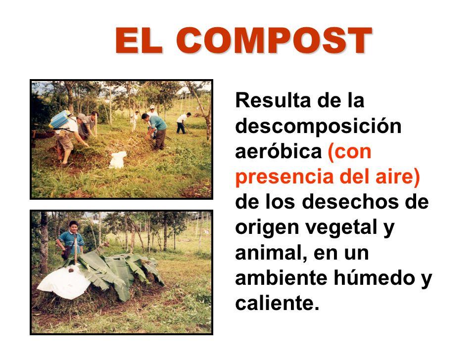 Resulta de la descomposición aeróbica (con presencia del aire) de los desechos de origen vegetal y animal, en un ambiente húmedo y caliente. EL COMPOS