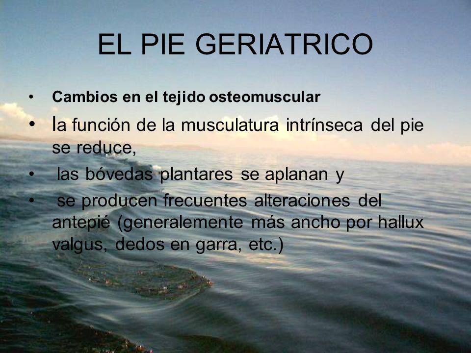 EL PIE GERIATRICO Cambios en el tejido osteomuscular l a función de la musculatura intrínseca del pie se reduce, las bóvedas plantares se aplanan y se