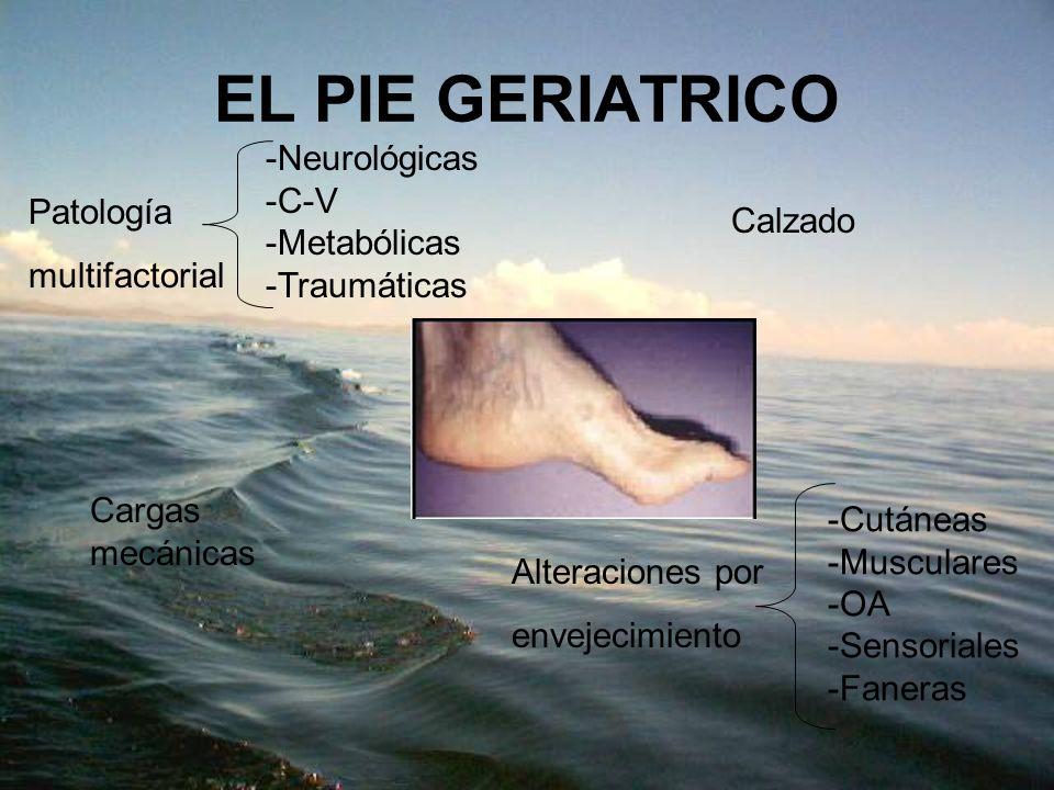 EL PIE GERIATRICO Patología multifactorial -Neurológicas -C-V -Metabólicas -Traumáticas Alteraciones por envejecimiento -Cutáneas -Musculares -OA -Sen
