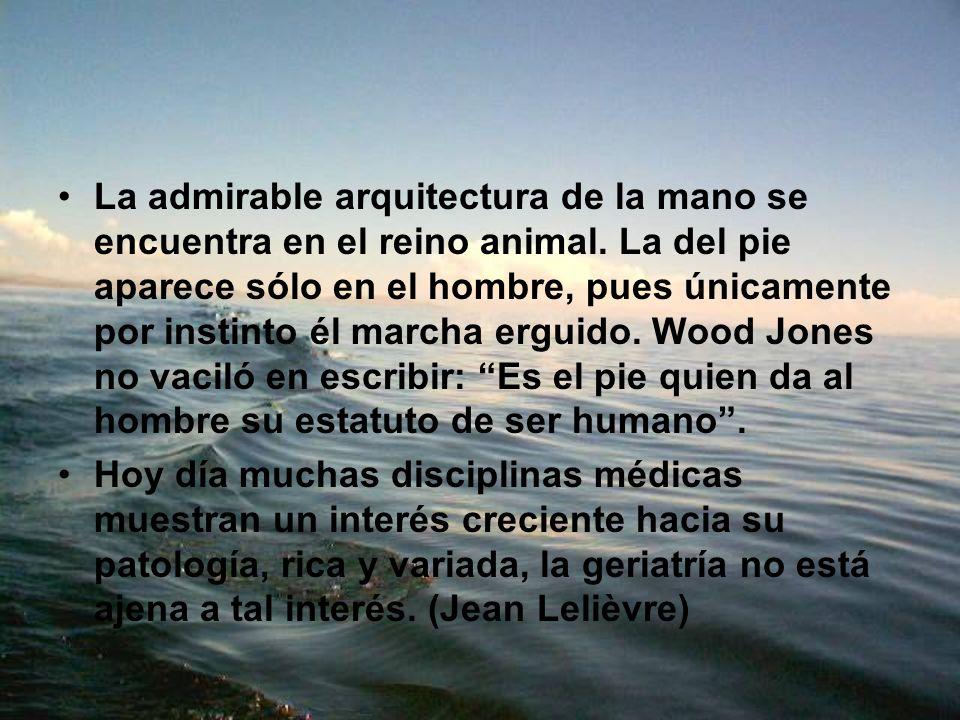 La admirable arquitectura de la mano se encuentra en el reino animal. La del pie aparece sólo en el hombre, pues únicamente por instinto él marcha erg