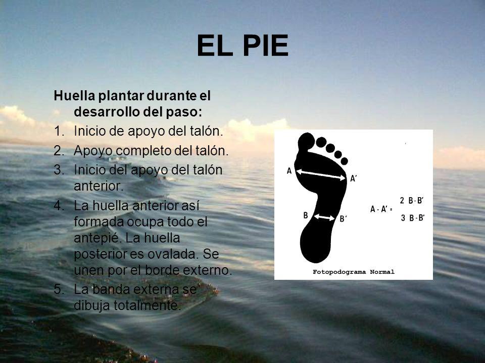 Cuidados del pie diabético: 1.Nunca caminar descalzo 2.Lavado diario de pies con agua y jabón suave.