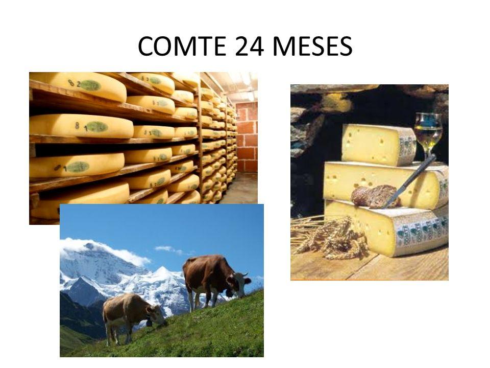 COMTE 24 MESES