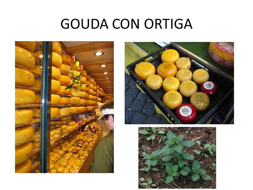GOUDA CON ORTIGA