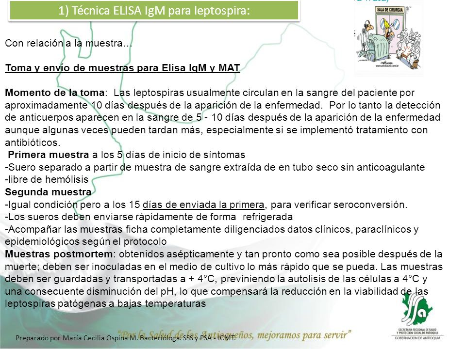 1) Técnica ELISA IgM para leptospira: Con relación a la muestra… Toma y envío de muestras para Elisa IgM y MAT Momento de la toma: Las leptospiras usu