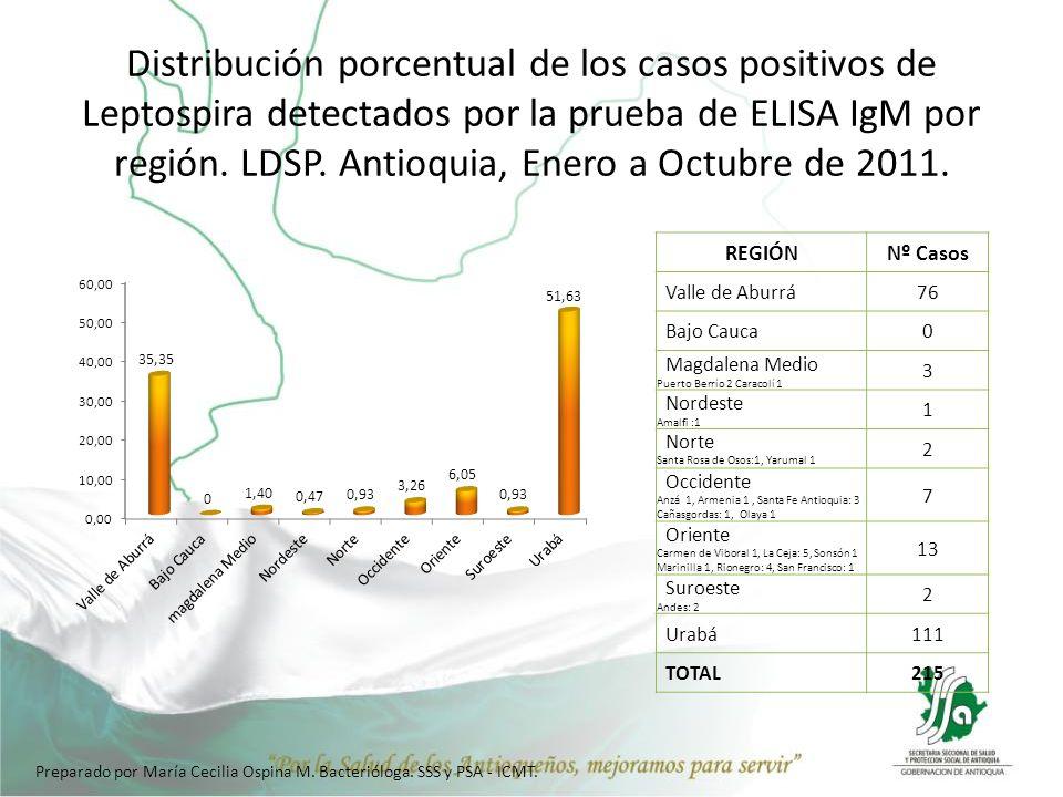 Distribución porcentual de los casos positivos de Leptospira detectados por la prueba de ELISA IgM por región. LDSP. Antioquia, Enero a Octubre de 201