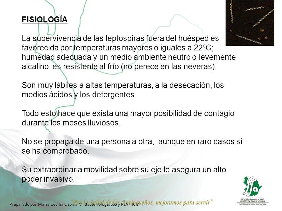 FISIOLOGÍA La supervivencia de las leptospiras fuera del huésped es favorecida por temperaturas mayores o iguales a 22ºC; humedad adecuada y un medio